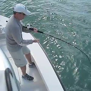 LiveLeak.com - Man Reels In Huge Trophy Fish Only To Witness It Ripped To Shreds By 2 Bull Sharks